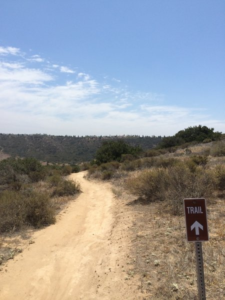 This trail narrows to singletrack then a huge drop for some fast downhill. Be careful!