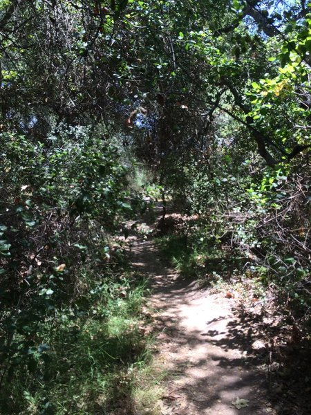 Penasquitos Canyon singletrack.