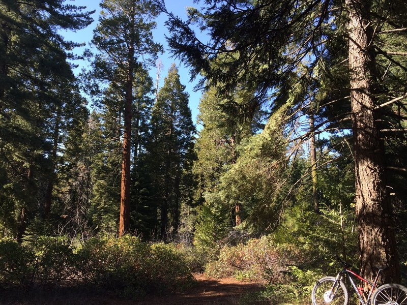 Four Corners is a great spot to hear the 'roar' of the forest.