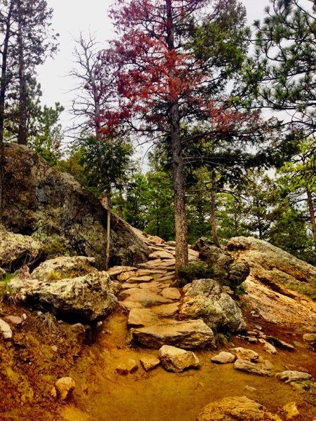 Challenging rock features amidst the flowy singletrack.