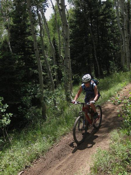 Cruising Aspen Trail