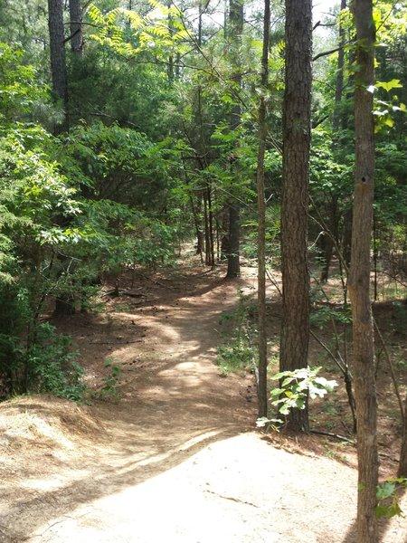 Start of Crow Branch Overlook loop.