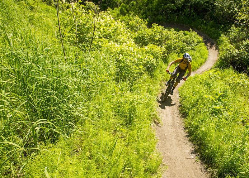 Quite fun biking....QFB trail.
