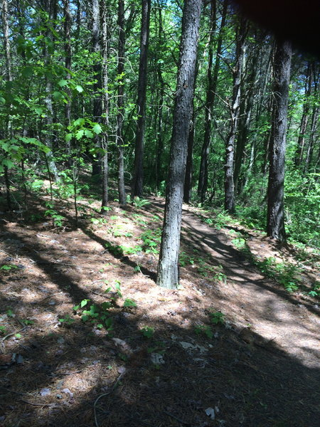 Trail in this section