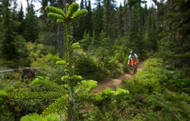 A perfect early season day on Mt. Spokane.