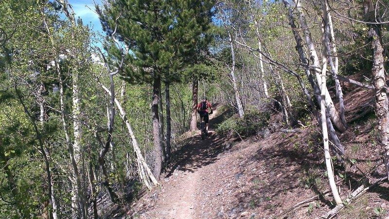 Minnie Mine Trail