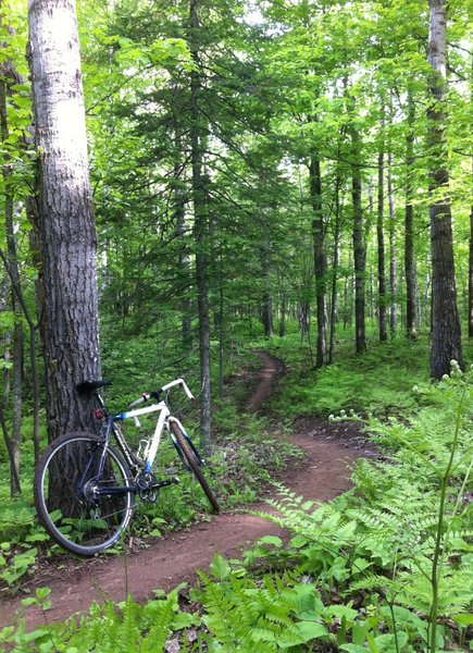Morning commute to work...on singletrack.