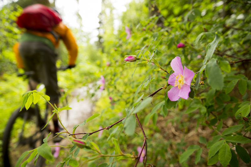 The last descent of Resurrection Pass trail is fun and full of flowers