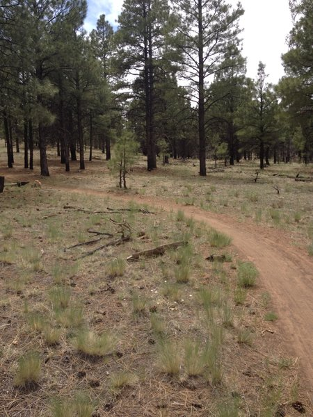 Flat, slightly sandy and through pretty forest.