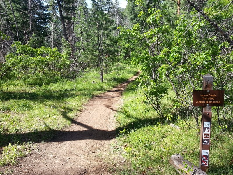 """Trail intersection.  make the """"wrong turn"""" and you'll make this trip MUCH longer."""