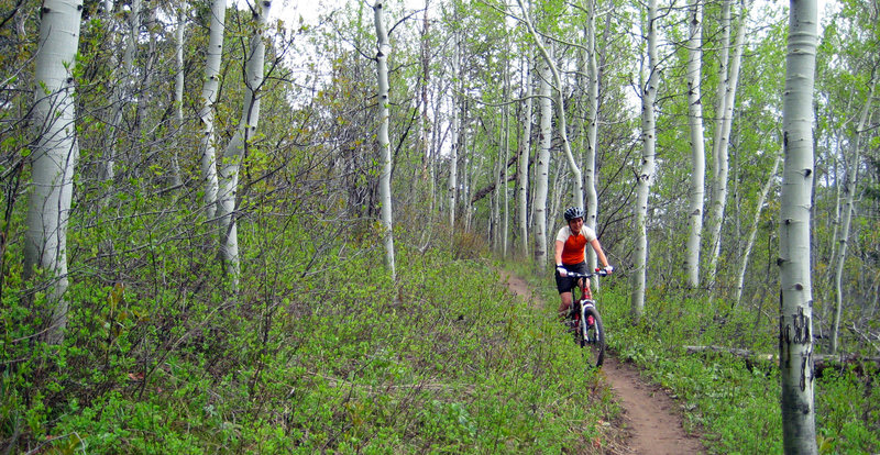 Aspens throughout the middle section.