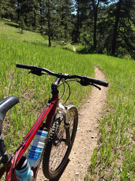 Smooth singletrack near the end of the dirt trail, before the route takes you back into a dirt road through a neighborhood.