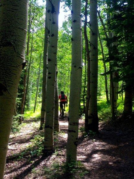 Through the aspen groves on Upper Lower.