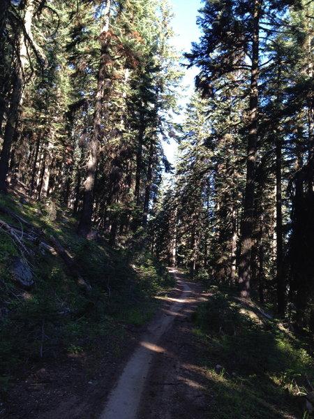 Upper Bull Gap Trail #1017