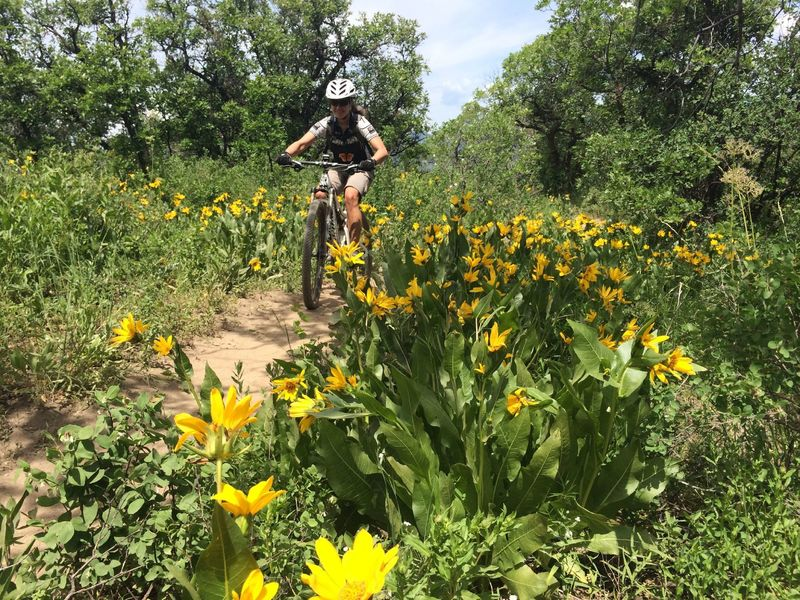 Larry's - one of our favorite trails in the area!