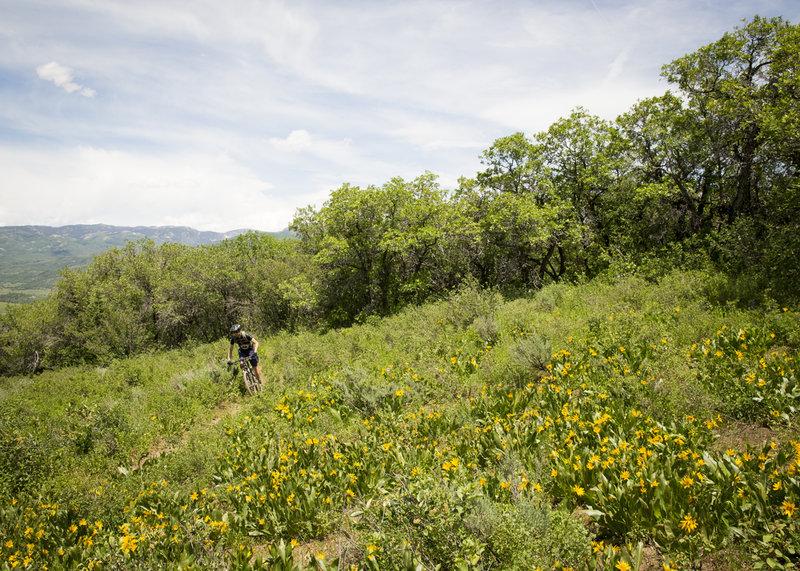 An open run of trail on Eye to Eye