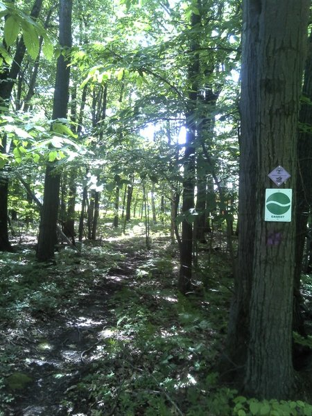 Beginner trail at Gannett Hill