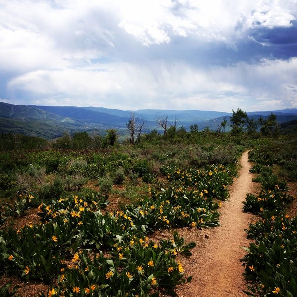 Wildflowers and great views of the Yampa Valley