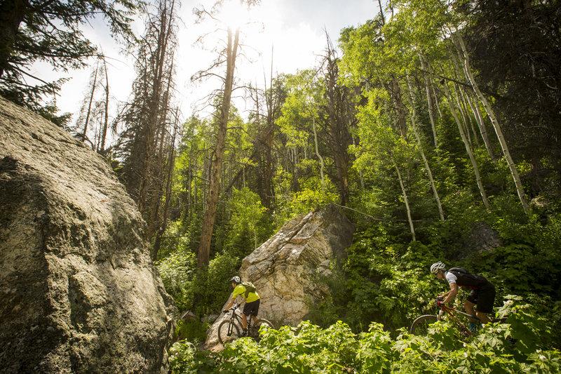 Big boulder section on Spring Creek trail.