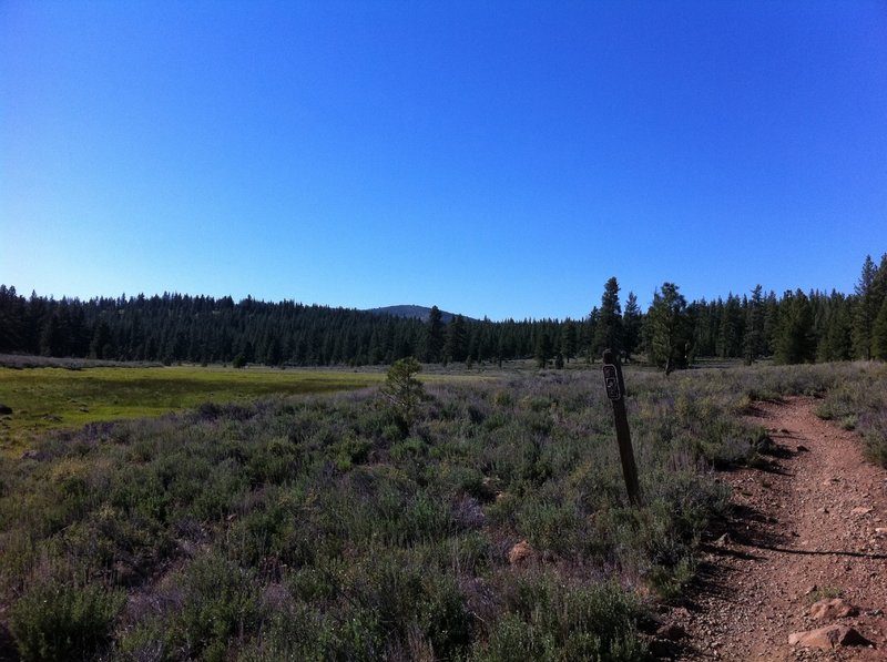 One of several alpine meadows you'll cruise through on your Emigrant Trail experience.