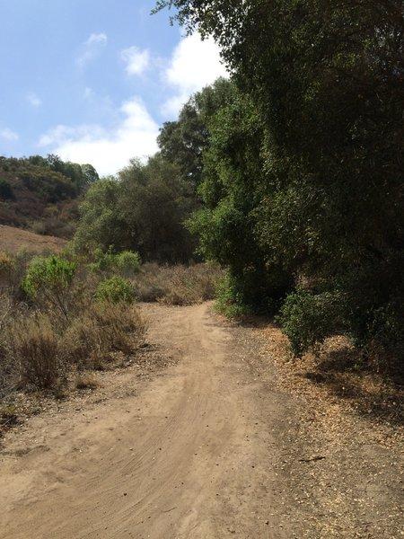 Ride through the oaks.