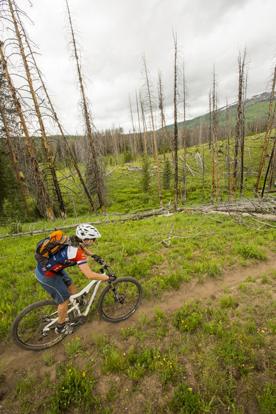 Making the connection to Coulton Creek trail on Cutover trail.