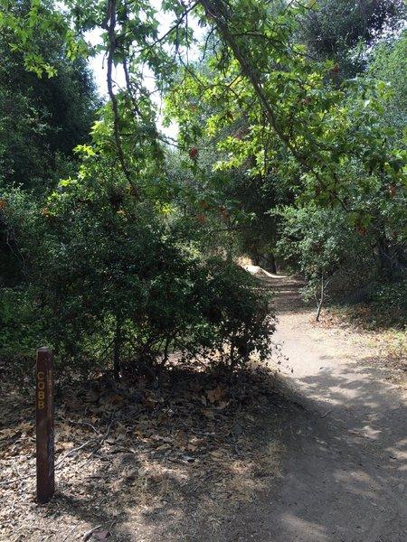 Cobb trail - fast downhill.