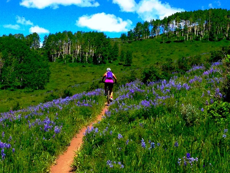 Riding through fields of Lupine.