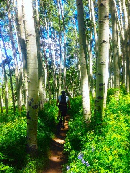 Short flowy segments through Aspen groves.