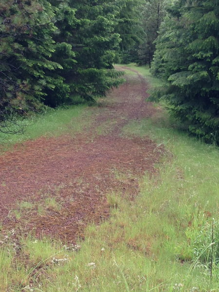 """Following the lava section, the Brown Mountain Trail merges with the """"Lollipop Loop"""" X-C ski trail."""