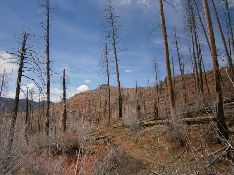 Start up in the sub alpine burn zone to the lower montane to the desert ecotone.  Lots of variety on this trail.