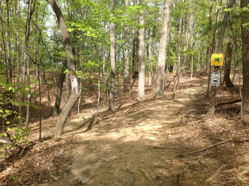 Beginning of Endurance Loop. Bear left to stay on Intermediate Trail.
