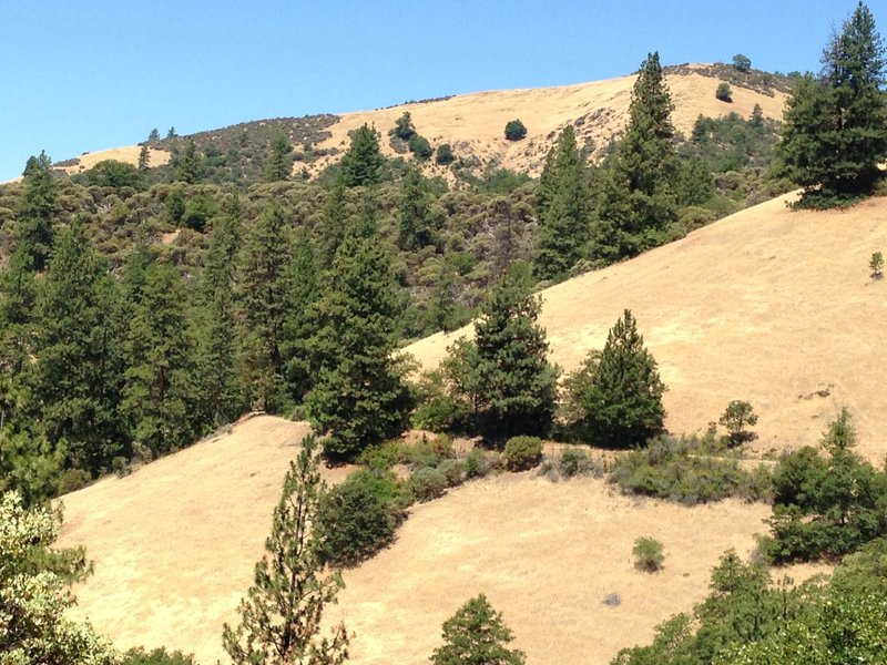The Sterling Mine Ditch cuts across the hillside between Bear Gulch and Tunnel Ridge