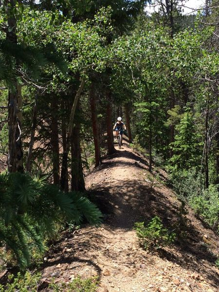 Cool tree tunnels on sections of the Galena Ditch Trail