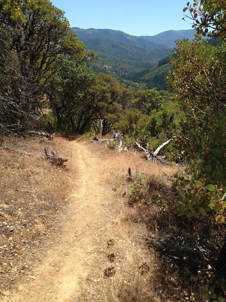 Near the top of the Bear Gulch Trail