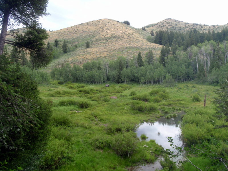 Meadows near the top of West Fork.