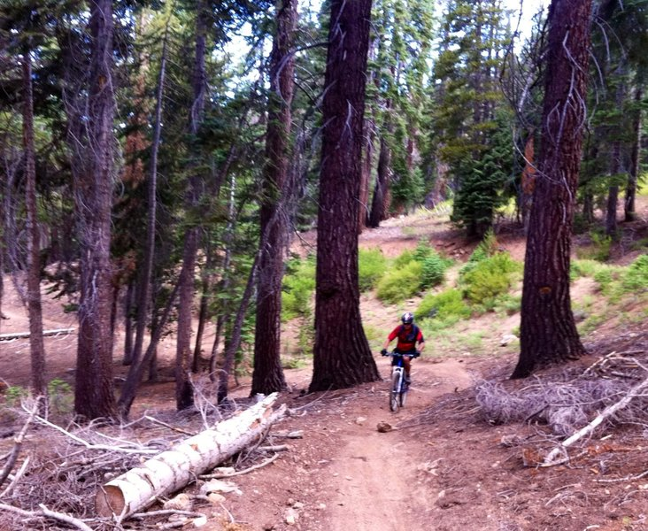Southern Sierras, Cannell Trail can be sub 60 degrees in July at 9200 feet