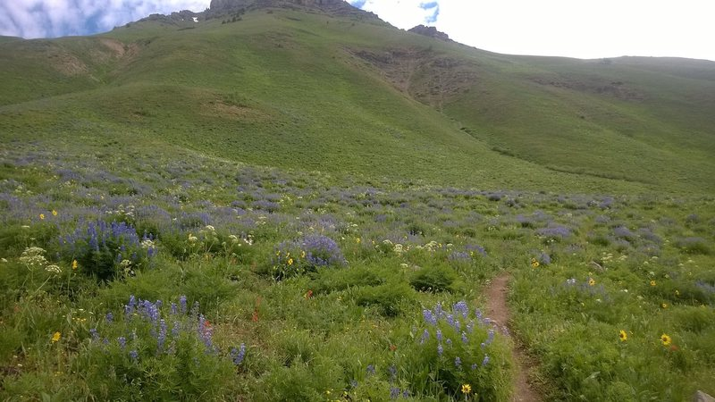 Wildflowers on the flanks of Teocalli Mountain