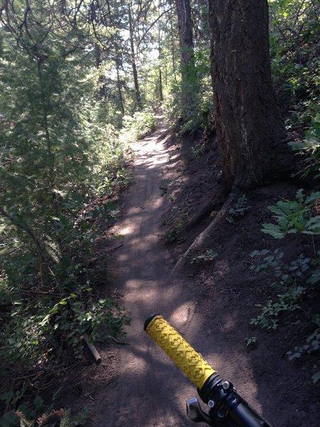 Upper portion of Hidden Valley trail