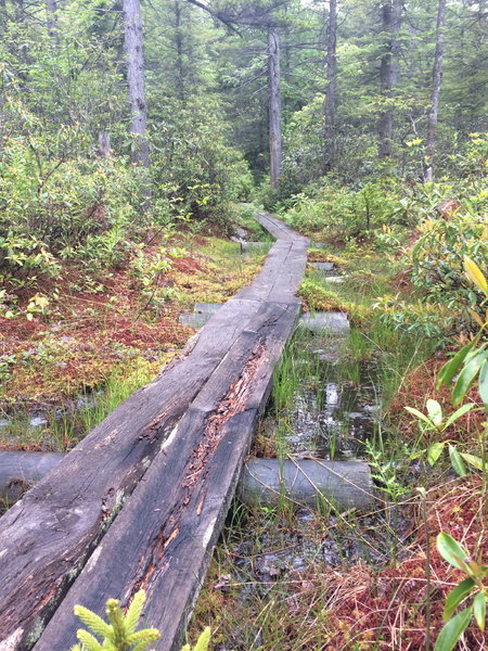 There are some boardwalks over bogs that are badly in need of repair.