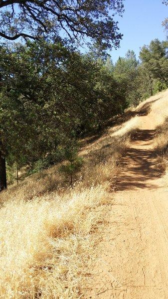 Ridge Section