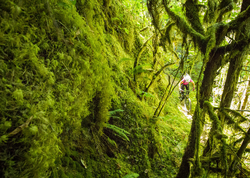 Riding narrow singletrack through lichen covered slopes on Deception Butte trail.