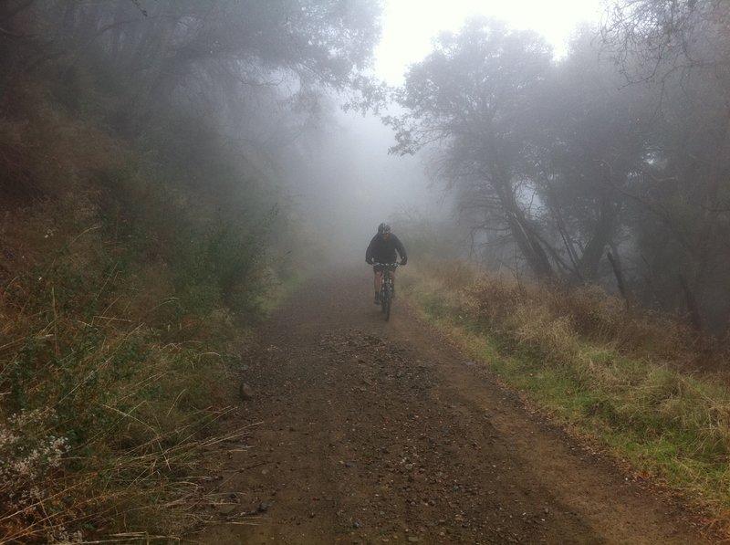 Gorilla in the Harding mist