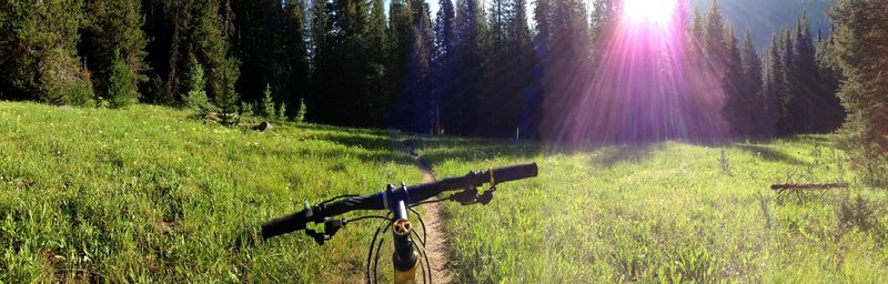 One of the several gorgeous open meadows the trail passes through. Something different than the dense forest singletrack.