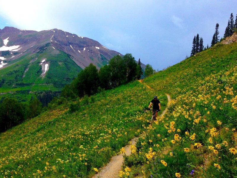 Fun fast downhill through fields of sunflowers.
