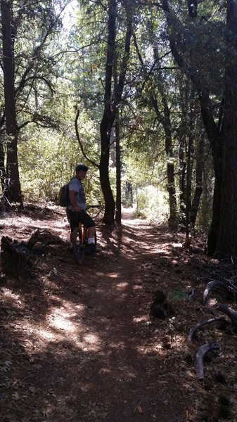 Woody, taking a break.  Long time rider of Boggs Forest and great help on trail information for the whole mountain.
