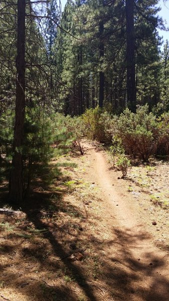Boggs Peak Trail