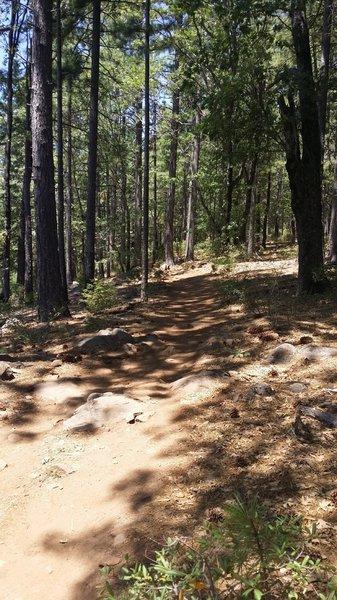More rocky trail
