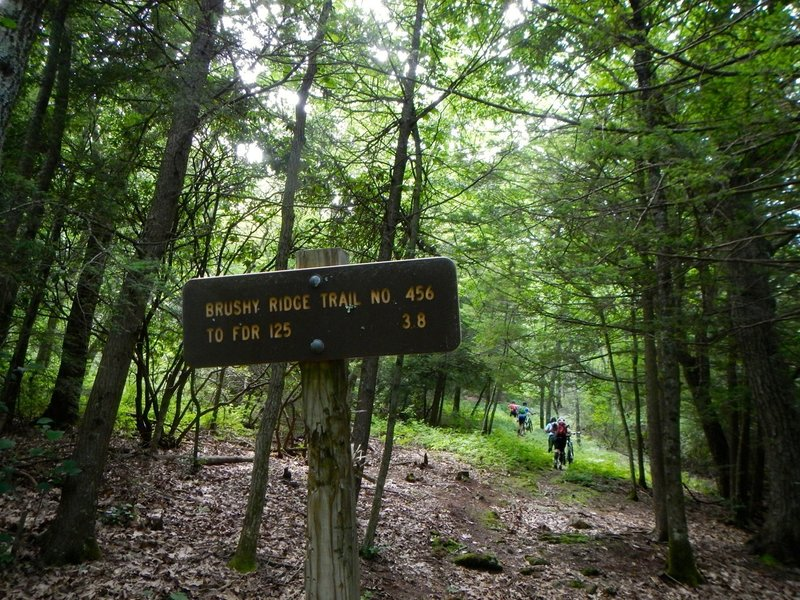 Trailhead is up and to the left from end of Little Mare trail