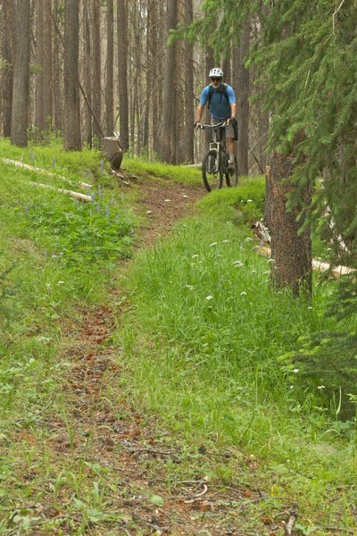 Headed up Elk Creek Trail through lush and enchanting forest near the Continental Divide.